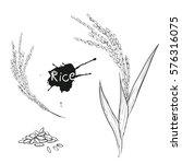 hand drawn vector monochrome... | Shutterstock .eps vector #576316075