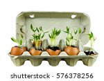 Sprouted Shoots Of Plants In...