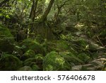 moss forest in shiratani... | Shutterstock . vector #576406678