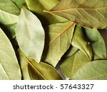 macro bay leaves spice for... | Shutterstock . vector #57643327