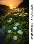 Calla Lilly During Sunset At...