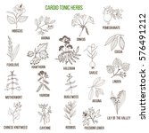 best herbs for cardio tonic.... | Shutterstock .eps vector #576491212