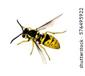 Wasp Insect Vector Color Drawing