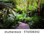 Otways National Park  Victoria...