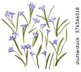 blue snowdrop flowers.... | Shutterstock . vector #576566518