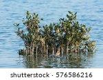 Aquatic Plants At The Sanad...