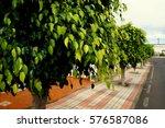 trees on the street | Shutterstock . vector #576587086