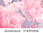 sweet color fabric roses in... | Shutterstock . vector #576593506
