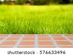 fresh spring green grass and... | Shutterstock . vector #576633496