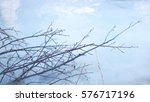 branches | Shutterstock . vector #576717196