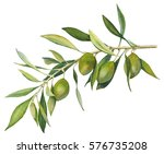 an olive branch with fruit and... | Shutterstock . vector #576735208