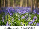 The Bluebells Flowers During...