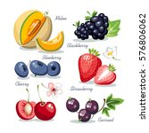 berries collection set melon... | Shutterstock .eps vector #576806062