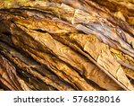 closeup of golden dried tobacco ... | Shutterstock . vector #576828016