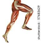 3d rendering of the male leg... | Shutterstock . vector #57683629
