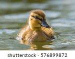 Baby Duck  Finland