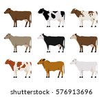 nine milk cows different breeds ... | Shutterstock .eps vector #576913696