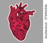 Hand Drawn Human Heart In...