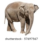 Isolated On White Elephant By...