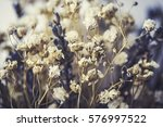close up of dried delicate...   Shutterstock . vector #576997522