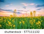 sunset sunrise sky over spring... | Shutterstock . vector #577111132