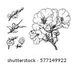 white tropical exotic... | Shutterstock . vector #577149922