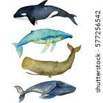 watercolor summer set of whales ... | Shutterstock . vector #577256542