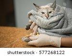 veterinary placing a catheter... | Shutterstock . vector #577268122