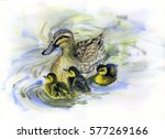 Watercolor Painting Of Ducks...