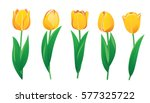 yellow tulips | Shutterstock .eps vector #577325722