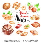 watercolor collection of nuts ... | Shutterstock . vector #577339432