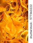 orange petals background of... | Shutterstock . vector #577363222