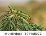 spurge hawk moth caterpillar... | Shutterstock . vector #577408072