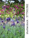 flower | Shutterstock . vector #577501582