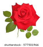 beautiful rose isolated on... | Shutterstock . vector #577501966