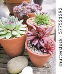 Collection Of Succulents In...
