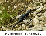 Small photo of The alpine salamander