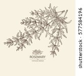 background with rosemary. hand... | Shutterstock .eps vector #577584196