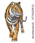tiger illustration | Shutterstock . vector #577633912