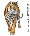 tiger illustration | Shutterstock . vector #577633912