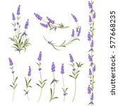 set of lavender flowers... | Shutterstock .eps vector #577668235