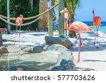 Flamingo And Iguana On The...