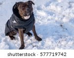 sweet english staffordshire...   Shutterstock . vector #577719742