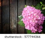 Pink Hydrangeas  Hydrangea...