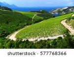 vineyard in dalmatia  croatia ... | Shutterstock . vector #577768366