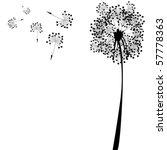 Dandelion Against White...