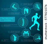 medical infographic of human... | Shutterstock .eps vector #577821076