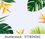 tropical plants on white... | Shutterstock . vector #577824262