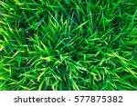 background of a green grass.... | Shutterstock . vector #577875382