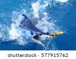 Big Game Fishing. Marlin On Th...